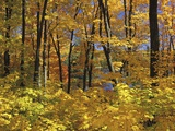 Fall Colors in Gatineau Park, Quebec, Canada Photographic Print by Mike Grandmaison