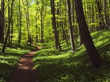 Path in beech forest Reproduction photographique par Frank Krahmer