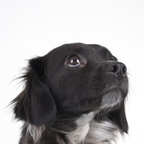 Spaniel puppy looking up Photographic Print by Michael Kloth