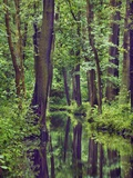 Forest and stream Photographic Print by Frank Krahmer