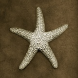 Sugar Starfish Reproduction photographique par John Kuss
