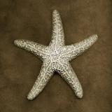 Sugar Starfish Fotografie-Druck von John Kuss