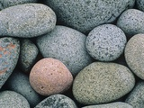 Detail of Pebbles on Long Island, Nova Scotia, Canada Photographic Print by Don Johnston
