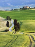 Corn fields and cypress trees in Pienza countryside Photographic Print by Frank Krahmer