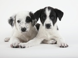 Two Puppies Photographic Print by Michael Kloth