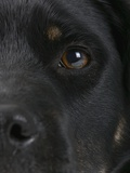 Dog's Eye and Nose Photographic Print by Michael Kloth