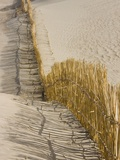 Reed fencing holding sand to prevent desertification Photographic Print by Keren Su