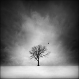 Solitary tree in a winter landscape Photographie par George Disario