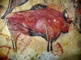 Cave Painting of Bison at Altamira Photographie