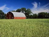 A Field of Wheat and Barn, Myrtle, Manitoba, Canada Photographic Print by Mike Grandmaison