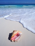 Mexico, Yucatan Peninsula, Carribean Beach at Cancun, Conch Shell on Sand Fotografisk tryk af Chris Cheadle