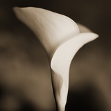 Calla Lily Photographic Print by Tom Marks