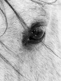 A Close Shot of a Horses Eye with Snow Flakes Taken in Alberta, Canada. Fotografie-Druck von Wayne Simpson