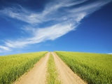 Country Back Road Through Spring Wheat Fields Photographic Print by Terry Eggers