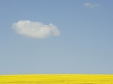 Wiltshire landscape Photographic Print by John Harper