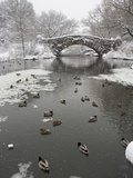 Lake and Bridge in Winter Photographic Print by Fotog