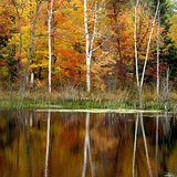 Autumn Colour Reflected in a Beaver Pond, Point Au Baril, Ontario, Canada. Photographic Print by Don Johnston