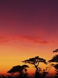 USA, California, Carmel, Highway 1 on Coast, Pebble Beach, Juniper Trees at Sunset Photographic Print by Chris Cheadle