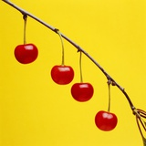 Four cherries by Tom Marks Photographic Print by Tom Marks