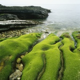 Moss Covered Rocks on Beach in Japan Photographic Print by Micha Pawlitzki