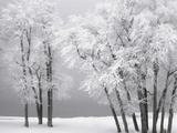Foggy winter day at Bear Lake Photographie par Scott Smith