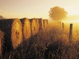 Misty Morning, Farmland and Wheat Straw Rolls, Near St. Adolphe, Manitoba, Canada Fotografisk tryk af Dave Reede