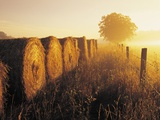 Misty Morning, Farmland and Wheat Straw Rolls, Near St. Adolphe, Manitoba, Canada Photographic Print by Dave Reede