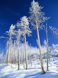 Trees in Snow Photographic Print by Terry Eggers