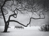 Park Benches In The Snow In Chicago Photographic Print by Alex Fradkin