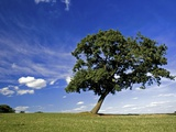 Lone tree at a meadow below a sunny blue sky Photographic Print by Phil Norton