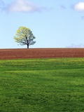 Lone Tree Blowing in Wind Near Sussex, New Brunswick, Canada. Photographic Print by  Barrett & Mackay