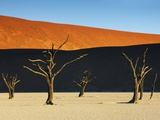 Bare trees at Dead Vlei Photographic Print by Frank Krahmer