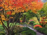 Fall colors at Portland Japanese Gardens, Portland Oregon Fotografie-Druck von Craig Tuttle