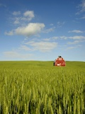 Red barn in field of green wheat Photographic Print by Wolfgang Kaehler