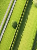 Hedge in The Hamptons Lmina fotogrfica por Cameron Davidson