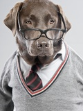 Dog in Sweater and Glasses Photographic Print by Justin Paget