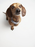 Cute Dog Looking Up Photographic Print by Michael Kloth