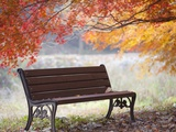 Lonely bench under the autumn tree Photographic Print by JongBeom Kim