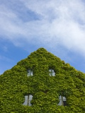 Medieval house wall covered by ivy, Visby Photographic Print by Keren Su