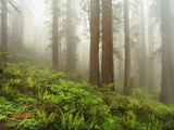 Forest along Damnation Creek Trail Photographic Print by William Manning