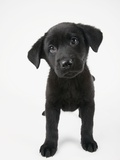 Cute Puppy Photographic Print by Michael Kloth