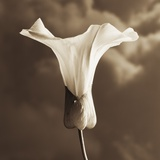 Morning Glory by Tom Marks Photographic Print by Tom Marks