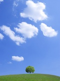 Single tree in a field under a blue sky. Hokkaido, Japan Photographic Print