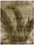 Sago Palm Photographic Print by John Kuss