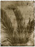Sago Palm Photographic Print by John Kuss