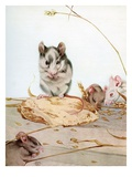 Illustration of Mice by Edward Julius Detmold Giclee Print