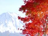 Mt. Fuji and Japanese maple tree in autumn, Yamanashi Prefecture, Honshu, Japan Photographic Print