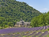 Lavender Fields and Senanque Monastery Photographic Print by David Sailors