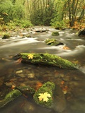 A Stream Flows Through the Rainforest at Goldstream Provincial Park Near Victoria, British Columbia Photographic Print by Glenn Bartley