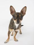 Alert Dog Photographic Print by Michael Kloth